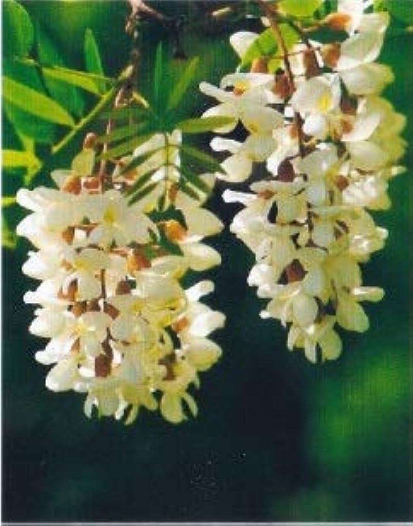 香りつぼみダイヤルアロマオイル アカシア 5ml エッセンシャルオイル 100%天然成分