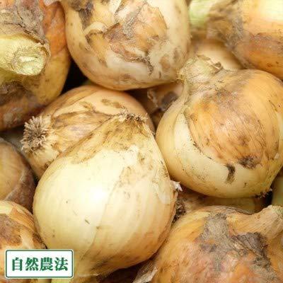 玉ねぎ 3kg (サイズ混合S〜L) 自然農法 (兵庫県淡路島 花岡農恵園) 産地直送 ふるさと21