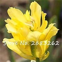 20:新しい種子2017本物のチューリップの種、珍しいチューリップの花の球根、花の種が愛を象徴する、盆栽の庭の植物 - 100個