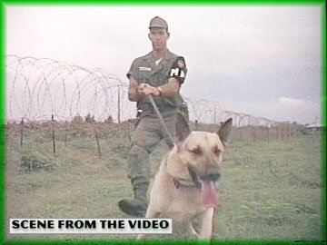 Dogs Of The Vietnam War: Scout, Sentry & Patrol