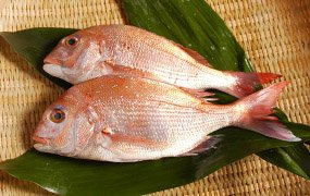 瀬戸内の天然活け鯛 500g写真は、2尾になっておりますが1尾となります。