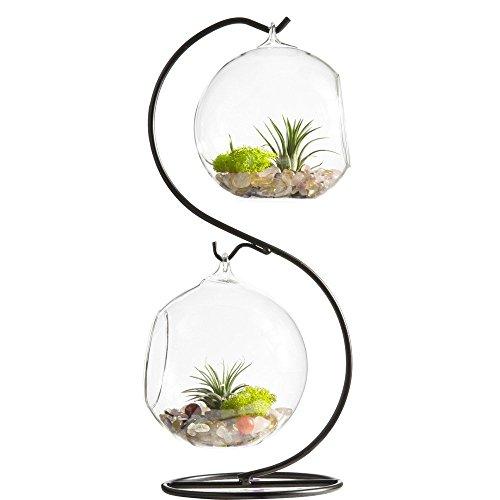 魅力的で透明なガラスボール、花瓶、花器です。多肉植物 多肉植物のコンテナ /ブラックメタルスタンド 高33CM (2個33cm)