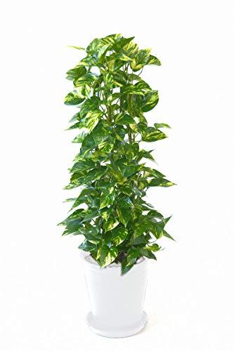 【大型から小型まで】観葉植物の人気おすすめ商品を徹底紹介のサムネイル画像
