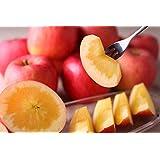 蜜入り りんご こうとく 2.5k(8~12玉)生産直販