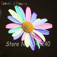 50 Unids Raras Chino Crisantemo Semillas、Semillas De Flores Perennes、Plantas De Colores、BalcÓ N Planta En Maceta Semillas Para El JardÍ N De Su Casa