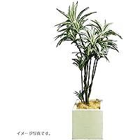 人工観葉植物 アーティフィシャルグリーンアレンジドラセナ 鉢付き 幅65cm rg-005