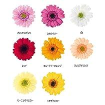 大地農園 ガーベラ 1輪[フルーティーオレンジ] 【プリザーブドフラワー】【単品】