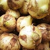 新玉ねぎ 3kg 有機肥料使用、減農薬・化学肥料不使用