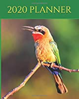 "2020 Planner: Bee Eater - Planner Diary - Monthly Calendar - Birds 2020,  Ornithology 2020, African Bee Eater, Best Diary, Birds Journal - 8x10"" (Creative Fusion Planners)"