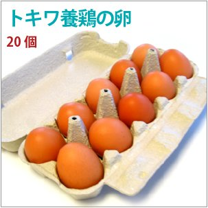 トキワの卵 20個