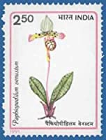 Orchids of India Orchid, Flowering Plant, Paphiopedilum venustum Indian Stamp