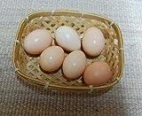 孵化用有精卵 白烏骨鶏の卵 6個入り