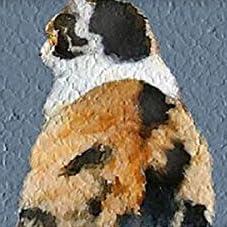 木枠セット 猫の後ろ姿 現代壁の絵 壁掛け 部屋飾り 背景絵画 壁アート しゃしん 額縁付きの完成品 装飾 軽くて取り付けやすい 玄関インテリア プレゼント モダン アート おしゃれ 壁絵