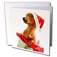 休日–サンタ犬–グリーティングカード Set of 12 Greeting Cards