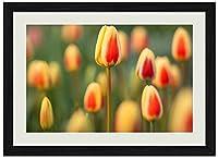 チューリップフィールド春の花–アートプリントウォールブラック木目フレーム画像16x 12inches )