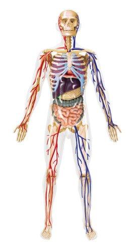 スカイネット 立体パズル 4D VISION 人体解剖モデル No.20 全身解剖スケルトンモデル