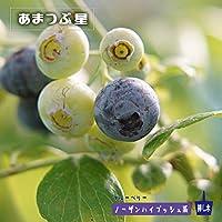ブルーベリー 苗 あまつぶ星 ノーザンハイブッシュ系2年生苗 ブルーベリー苗 blueberry