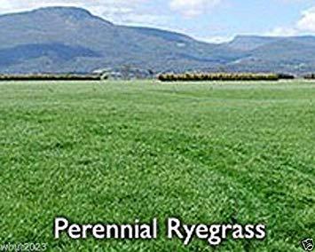 PLAT会社-SEEDSペレニアルライグラス-L、ピュア種子...