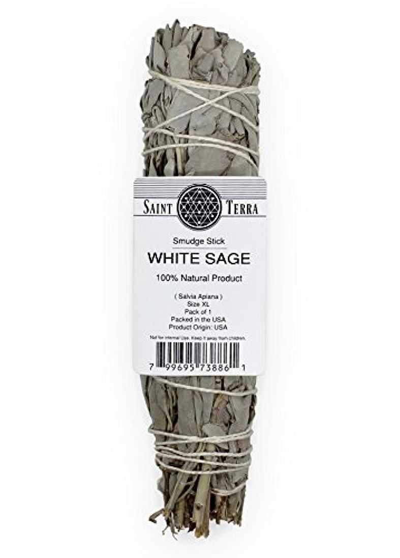 コミュニティええ世論調査Saint Terra – Extra LargeジャンボホワイトセージSmudge Stick ( 8.5 inches long )