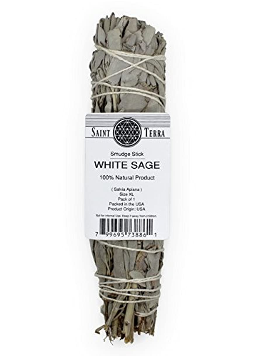 倒産記憶密度Saint Terra – Extra LargeジャンボホワイトセージSmudge Stick ( 8.5 inches long )