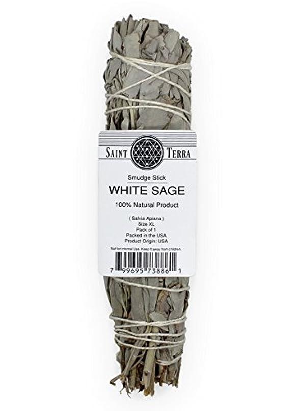 こだわり代表団腸Saint Terra – Extra LargeジャンボホワイトセージSmudge Stick ( 8.5 inches long )