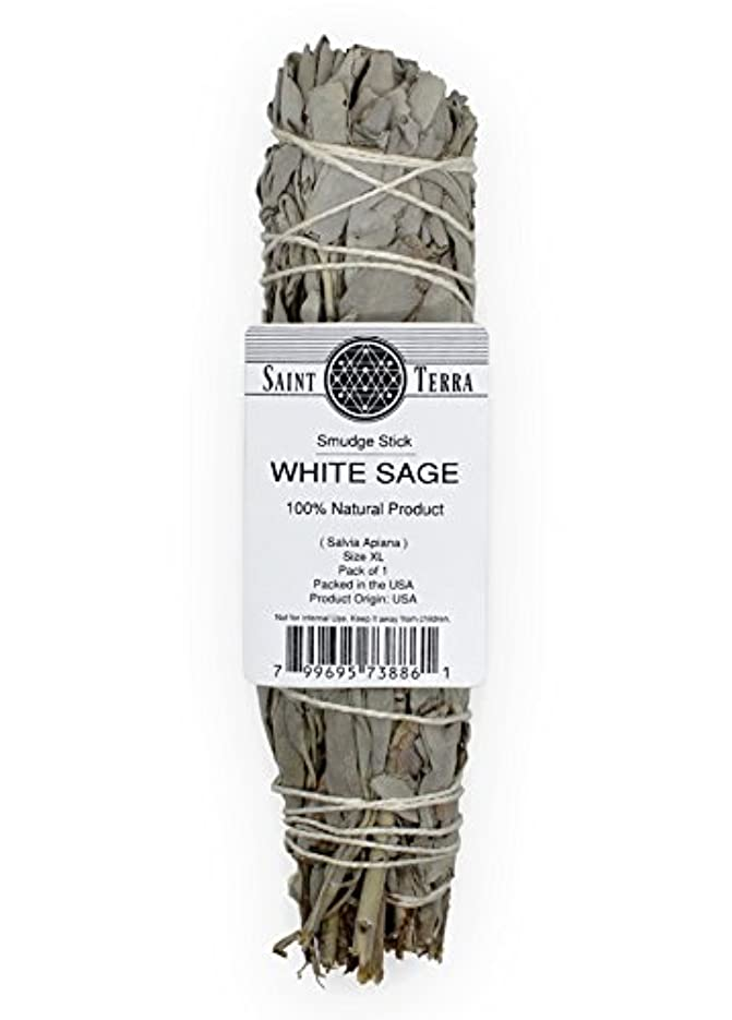 ウェーハ開発する泣くSaint Terra – Extra LargeジャンボホワイトセージSmudge Stick ( 8.5 inches long )