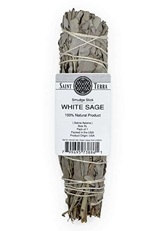 質量革命的地図Saint Terra – Extra LargeジャンボホワイトセージSmudge Stick ( 8.5 inches long )