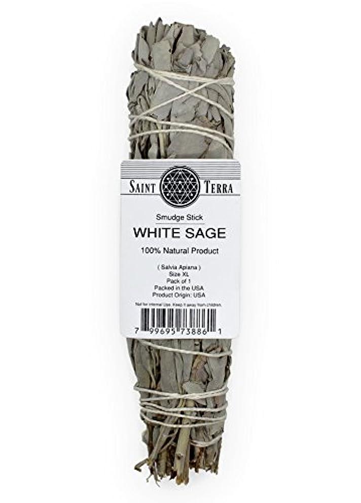 スノーケルバレーボール奪うSaint Terra – Extra LargeジャンボホワイトセージSmudge Stick ( 8.5 inches long )