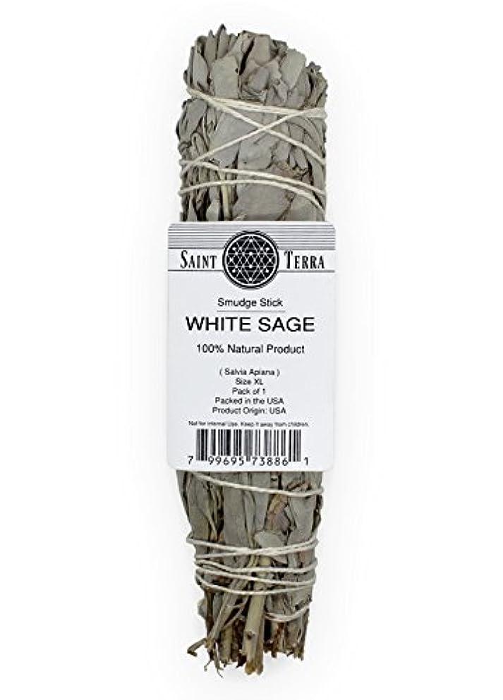 応じる突然みがきますSaint Terra – Extra LargeジャンボホワイトセージSmudge Stick ( 8.5 inches long )