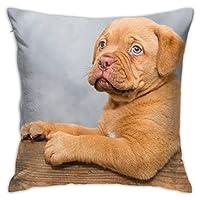 かわいいアメリカンブルドッグブラウン犬装飾スロー枕カバー、コットンダブルプリント枕ケース収縮耐性ソファベッドオフィス装飾18インチX18で
