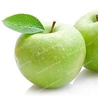 100個の有機的な甘いアップル盆栽レアフルーツ盆栽シーズン4シーズン播種レアグリーンフルーツポット健康ガーデンカラー3