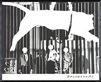 ポスター ジョン バルデッサリ Tiger with No Stripes 2017 額装品 アルミ製ハイグレードフレーム(ブラック)