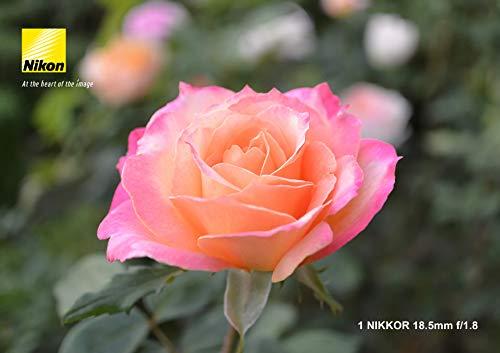 『Nikon 単焦点レンズ 1 NIKKOR 18.5mm f/1.8 シルバー ニコンCXフォーマット専用』の5枚目の画像