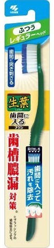 軽純正欠点生葉歯間に入るブラシ レギュラー ふつう × 10個セット
