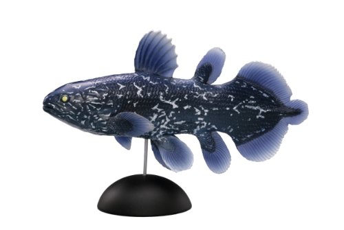 Marine Hall aquatales Coelacanth (Parr) 100 mm made of PolyStone completed figure 1-002