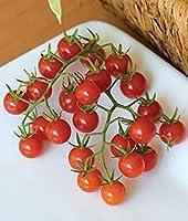 盆栽の種30チェリートマトシュガースウィーティオーガニック
