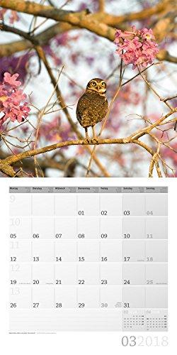 Eulen 2018 Art12 Collection: Broschuerenkalender