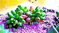 熱い販売100ピースまれな多肉植物種子リソップ種子Pseudotruncatellaオフィス盆栽植物花種子屋内果樹園植物