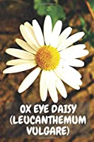OX EYE DAISY: Notebook with Flowers for anyone, Notebook for Drawing and Writing (Colorful & Cartoon Cover, 110 Pages, Blank, 6 x 9) (Flower Notebooks)
