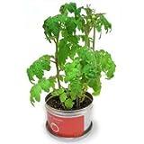 ミニトマトの栽培セット!リトルガーデン(Little Garden) ・プロ ミニトマト