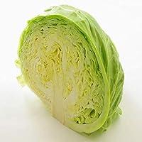 【産地厳選】低農薬 キャベツ 1箱 大きさお任せ 約10kg