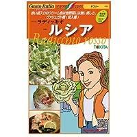 チコリー 種【 ルシア 】小袋(約80粒)