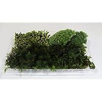 【 翔美苑 】苔 4種 セット ヒノキゴケ アラハゴケ スナゴケ シノブゴケ 1パック テラリウム 用