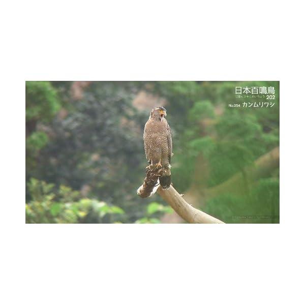 シンフォレストBlu-ray 日本百鳴鳥 2...の紹介画像12