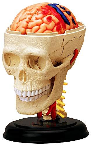 青島文化教材社 スカイネット 立体パズル 4D VISION 人体解剖 No.04 頭解剖モデル