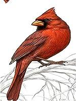 Diyの油絵子供のためのデジタル油絵大人初心者16x20インチ、ブランチの赤い鳥--クリスマスの装飾ホームインテリアギフト (フレーム)