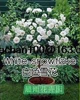 白:100Chineseローズツリーの種子バラエティー理想的なDiyヤード盆栽花あなたが愛する人のための完璧なギフト