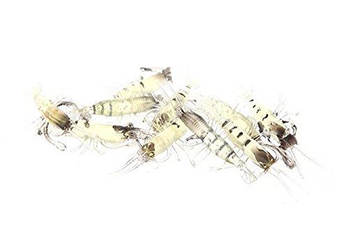 エビ ワーム ソフトルアー 全長5cm 5g 10個セット