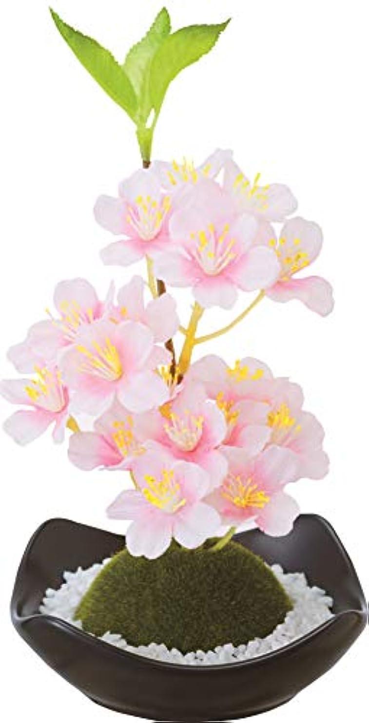 フラップ上陸休憩するカメヤマキャンドルハウス 苔玉フレグランス 桜