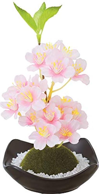 意志不道徳数学的なカメヤマキャンドルハウス 苔玉フレグランス 桜